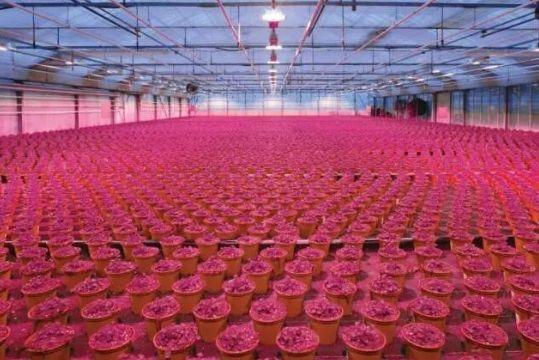 欧司朗园艺LED系列强势K保鲜设备.O传统高压钠灯保鲜设备